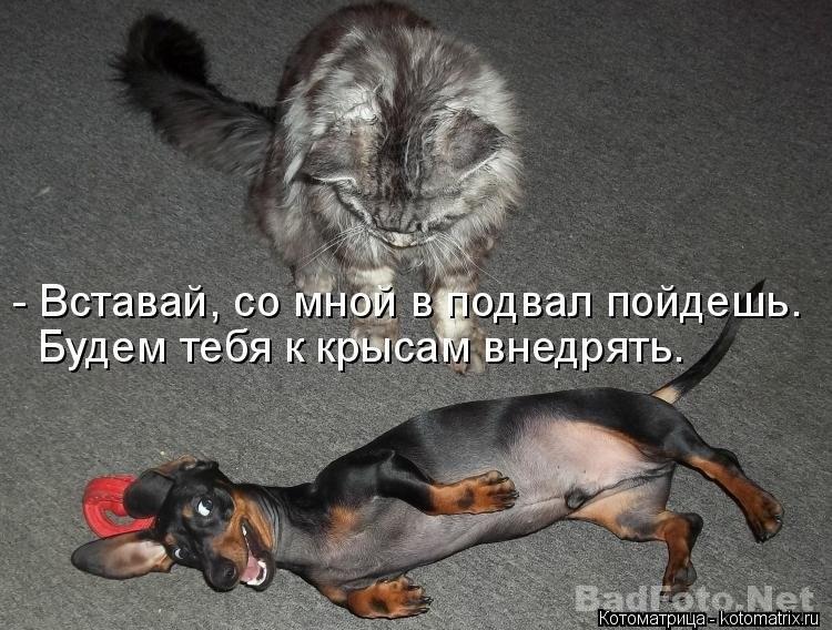 http://s7.uploads.ru/2Gzf4.jpg