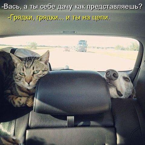 http://s7.uploads.ru/3gk8X.jpg