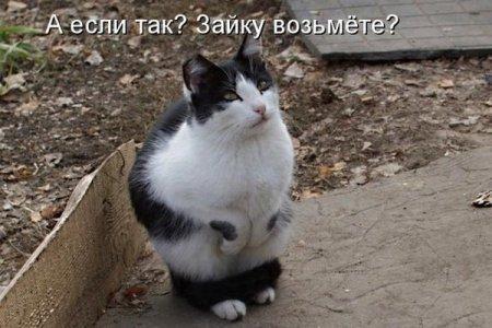 http://s7.uploads.ru/3lomG.jpg