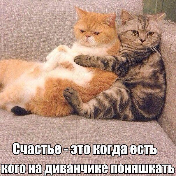 http://s7.uploads.ru/5Shdp.jpg
