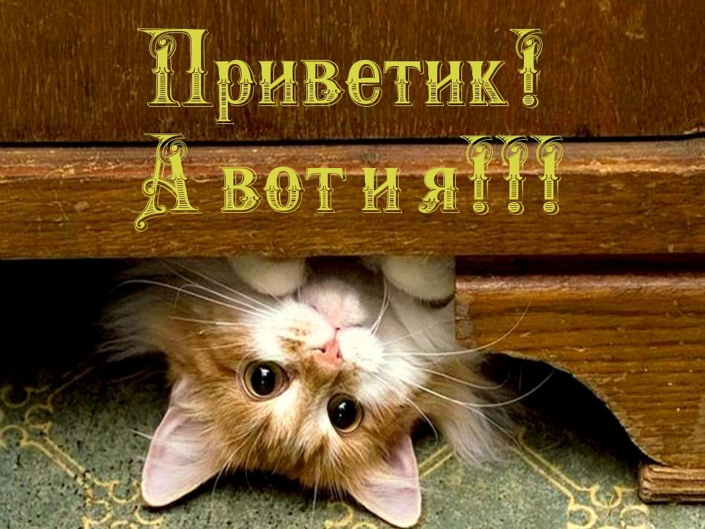 http://s7.uploads.ru/8S65N.jpg
