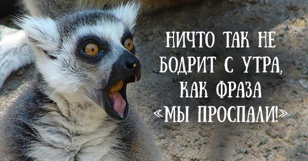 http://s7.uploads.ru/8lIW6.jpg