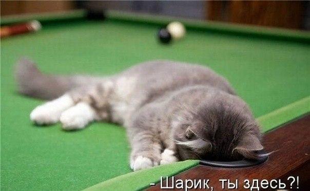 http://s7.uploads.ru/EIeAO.jpg