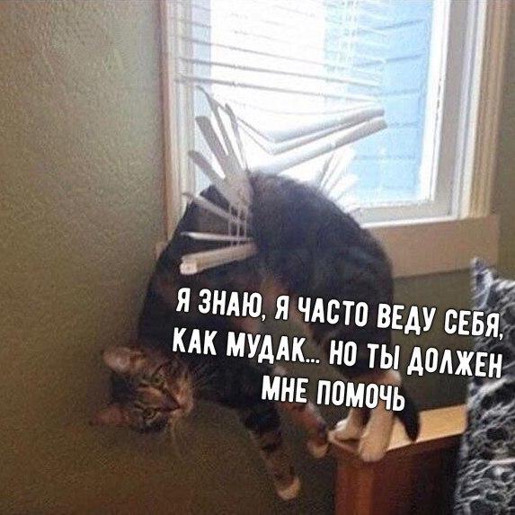 http://s7.uploads.ru/H7QmD.jpg