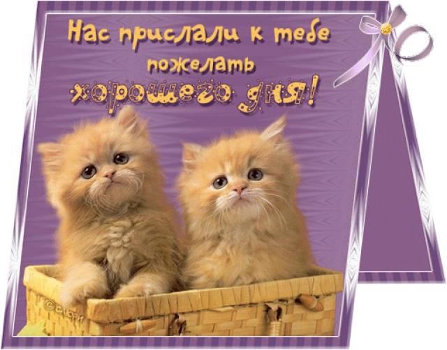 http://s7.uploads.ru/HTLPS.jpg