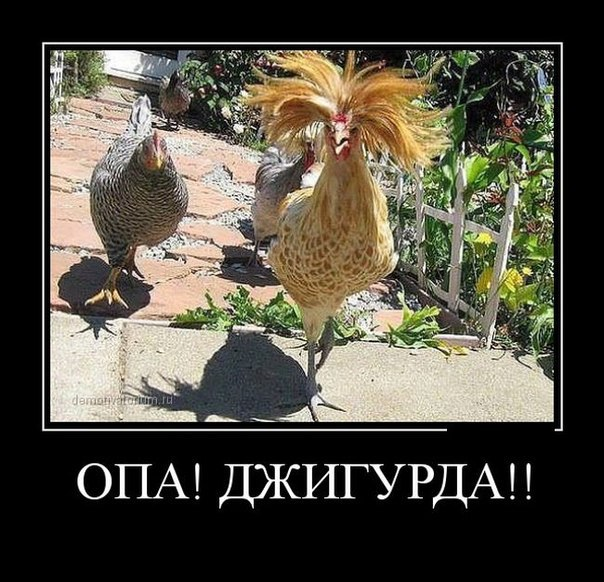 http://s7.uploads.ru/I4J53.jpg