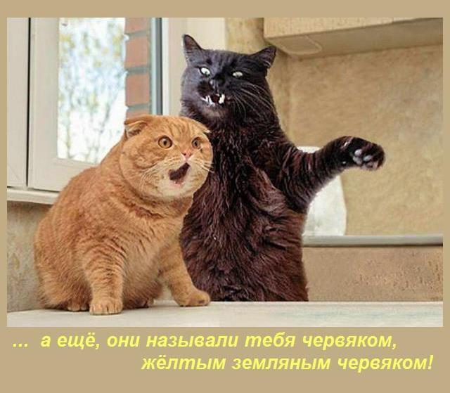 http://s7.uploads.ru/IjFkp.jpg