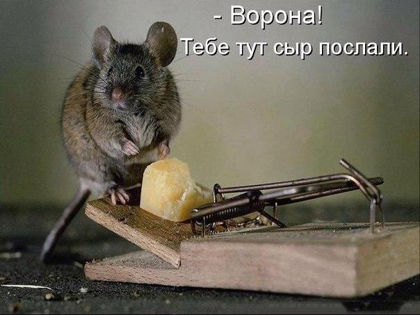 http://s7.uploads.ru/Iscg5.jpg