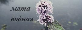 http://s7.uploads.ru/KRjOp.jpg