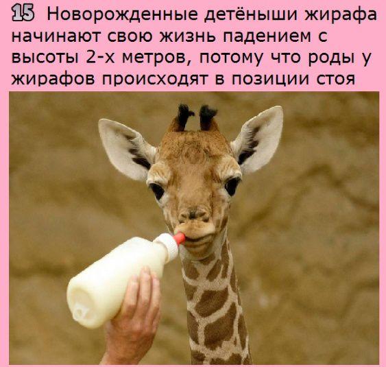 http://s7.uploads.ru/Knwjl.jpg