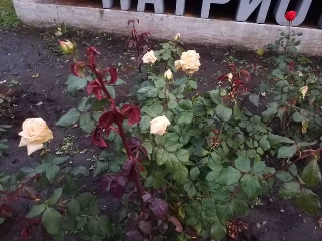 http://s7.uploads.ru/LG81t.jpg