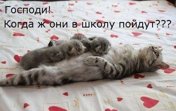 http://s7.uploads.ru/M135B.jpg