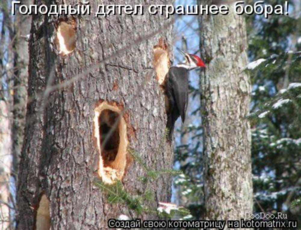 http://s7.uploads.ru/MHnxl.jpg