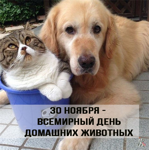 http://s7.uploads.ru/MOdGv.jpg