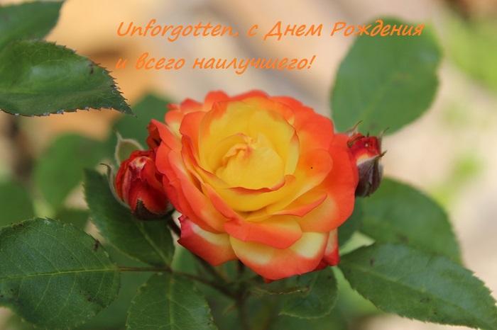 http://s7.uploads.ru/Paw24.jpg