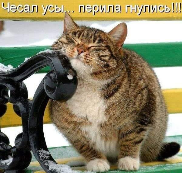 http://s7.uploads.ru/ThbR5.jpg