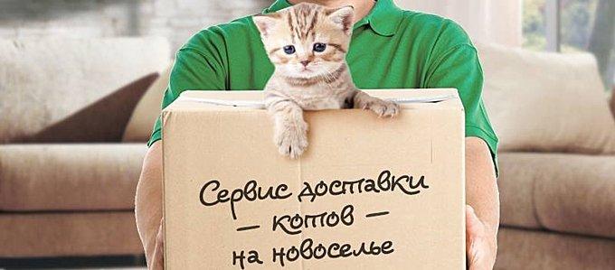 http://s7.uploads.ru/Ve6it.jpg