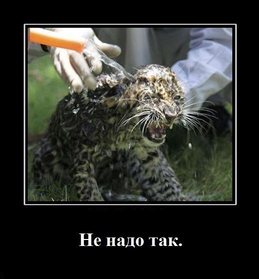 http://s7.uploads.ru/WwLA4.jpg