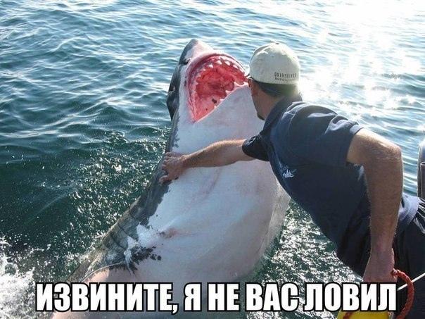 http://s7.uploads.ru/X00OZ.jpg
