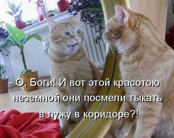 http://s7.uploads.ru/XI3aO.jpg