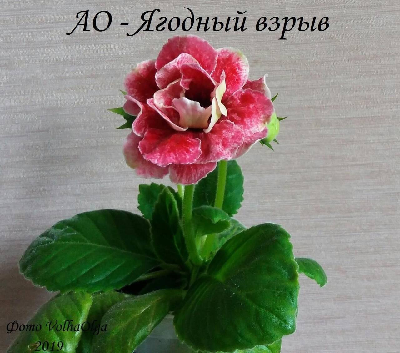 http://s7.uploads.ru/ZNsHI.jpg