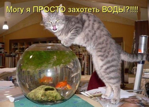 http://s7.uploads.ru/aKpr4.jpg