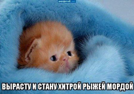 http://s7.uploads.ru/aR97Q.jpg