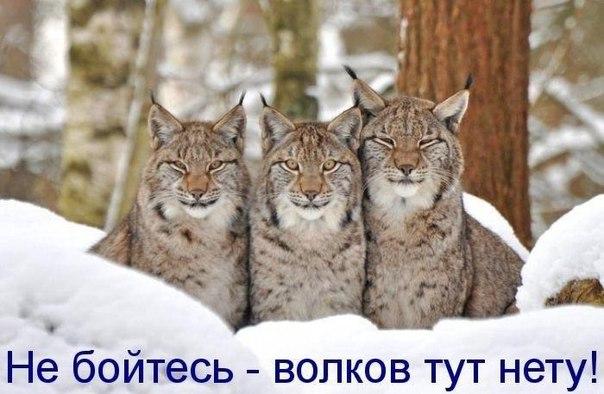 http://s7.uploads.ru/bj6Wi.jpg