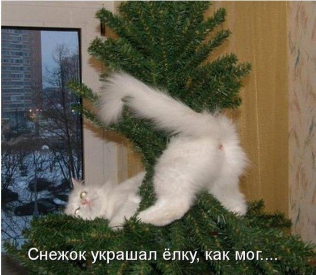 http://s7.uploads.ru/gfvd8.jpg