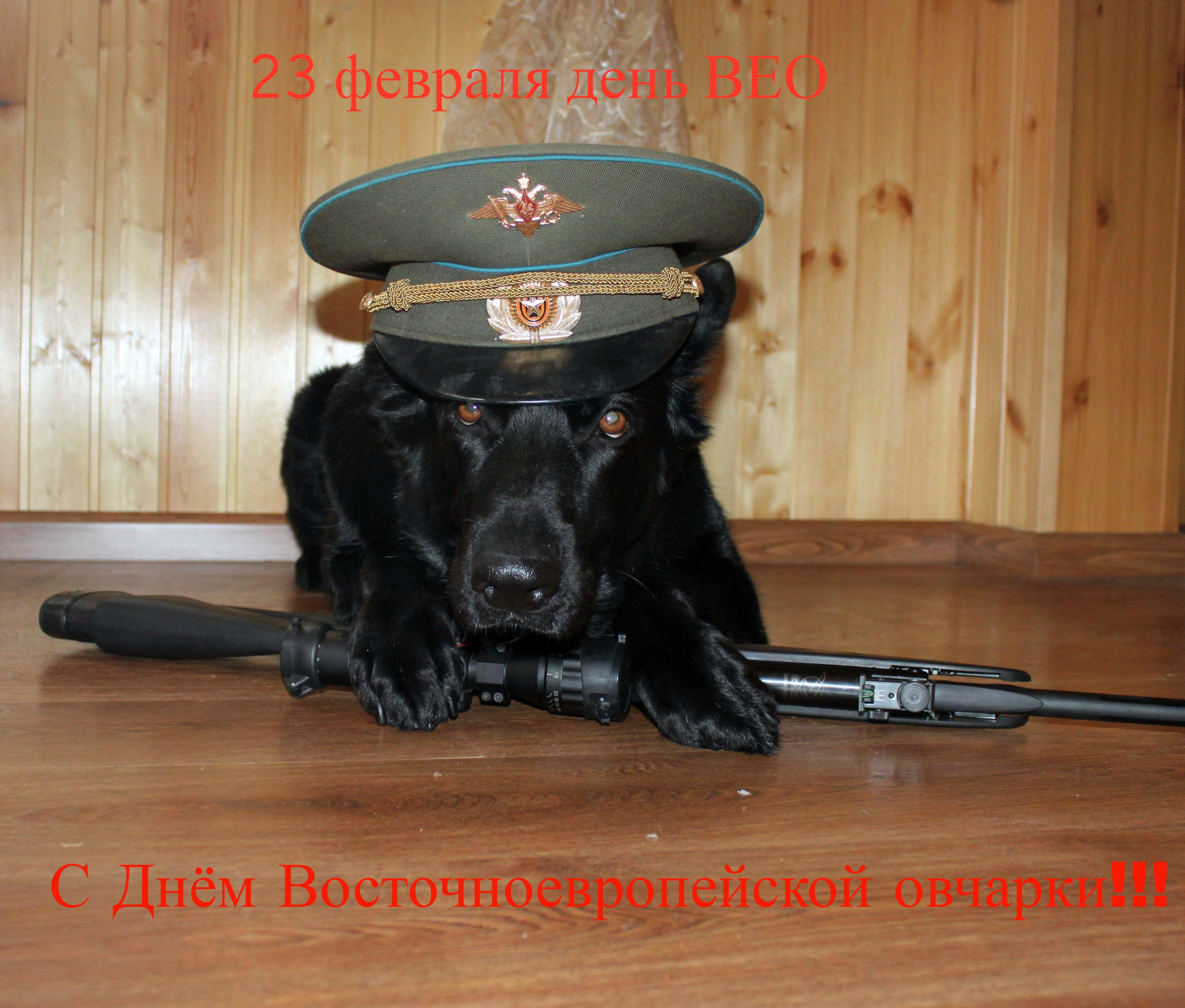http://s7.uploads.ru/hXeBD.jpg