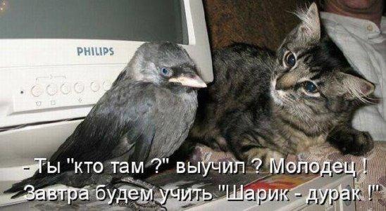 http://s7.uploads.ru/hdtDu.jpg