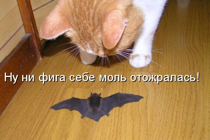 http://s7.uploads.ru/iCGrv.jpg
