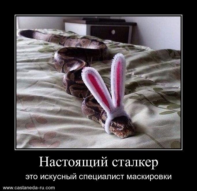 http://s7.uploads.ru/kSZhq.jpg