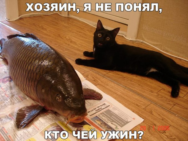 http://s7.uploads.ru/lFcBz.jpg