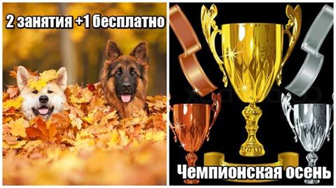 http://s7.uploads.ru/meb6U.jpg