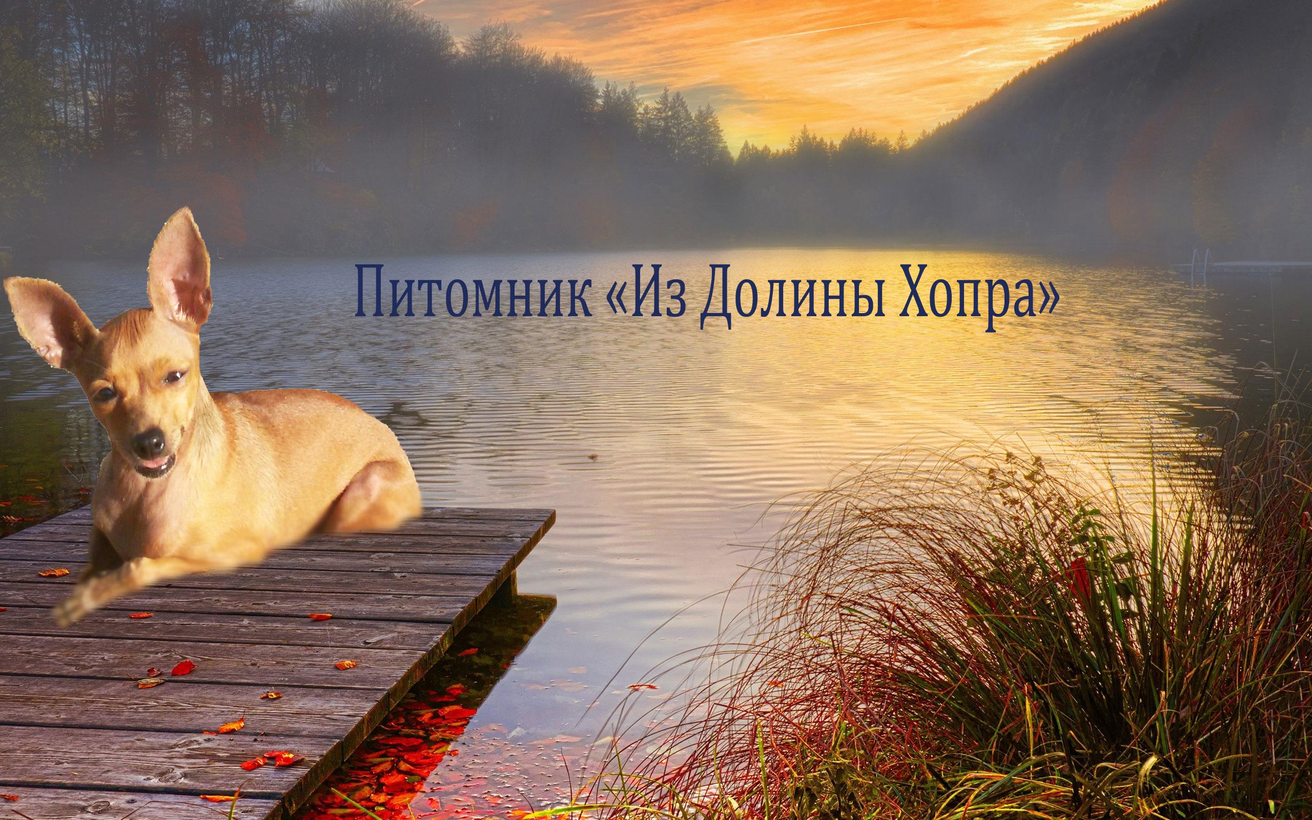 http://s7.uploads.ru/molze.png
