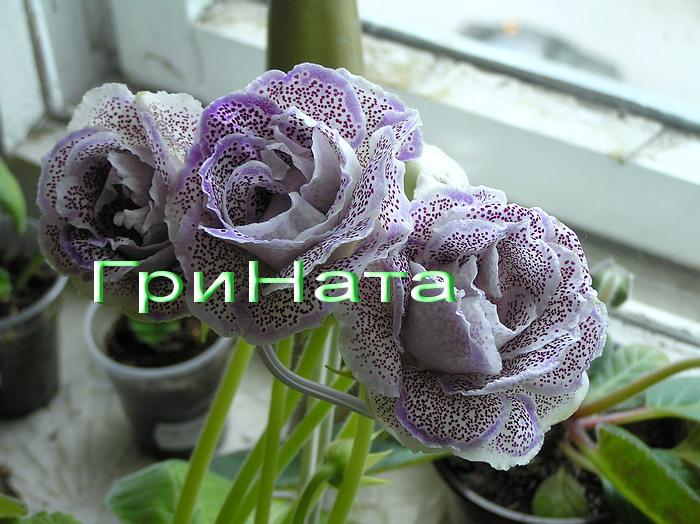 http://s7.uploads.ru/noFeO.jpg