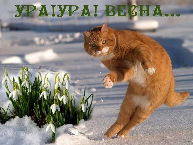 http://s7.uploads.ru/oOrqB.jpg
