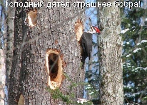 http://s7.uploads.ru/ofZGw.jpg