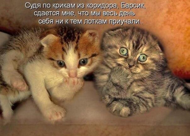 http://s7.uploads.ru/pJ7j3.jpg