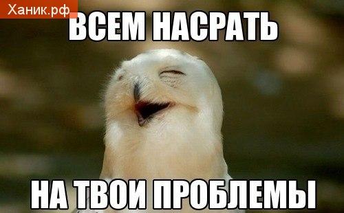 http://s7.uploads.ru/pN0cj.jpg