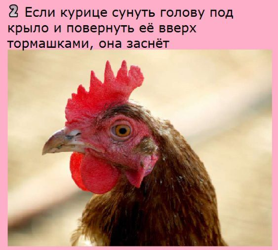 http://s7.uploads.ru/qxUn2.jpg