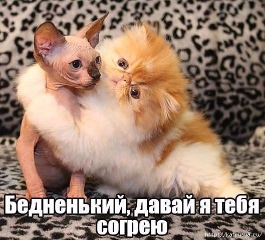http://s7.uploads.ru/r2pTG.jpg