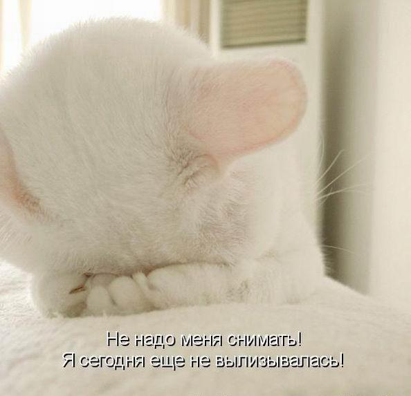http://s7.uploads.ru/t/085Zk.jpg