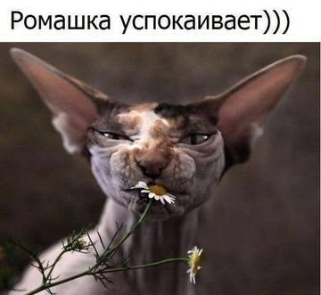 http://s7.uploads.ru/t/0Nr2s.jpg