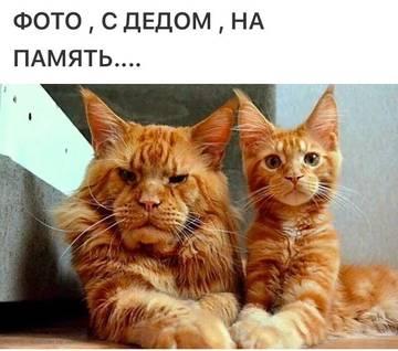 http://s7.uploads.ru/t/1T4j3.jpg