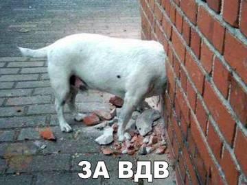 http://s7.uploads.ru/t/29Psl.jpg