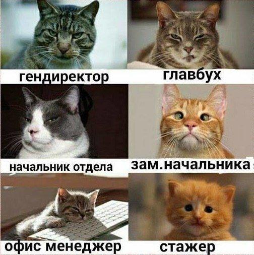 http://s7.uploads.ru/t/2ljIH.jpg