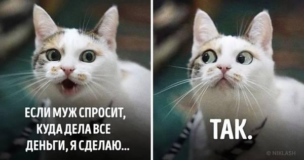 http://s7.uploads.ru/t/4Vmjd.jpg