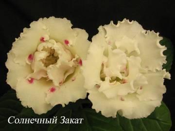 http://s7.uploads.ru/t/5Upb2.jpg
